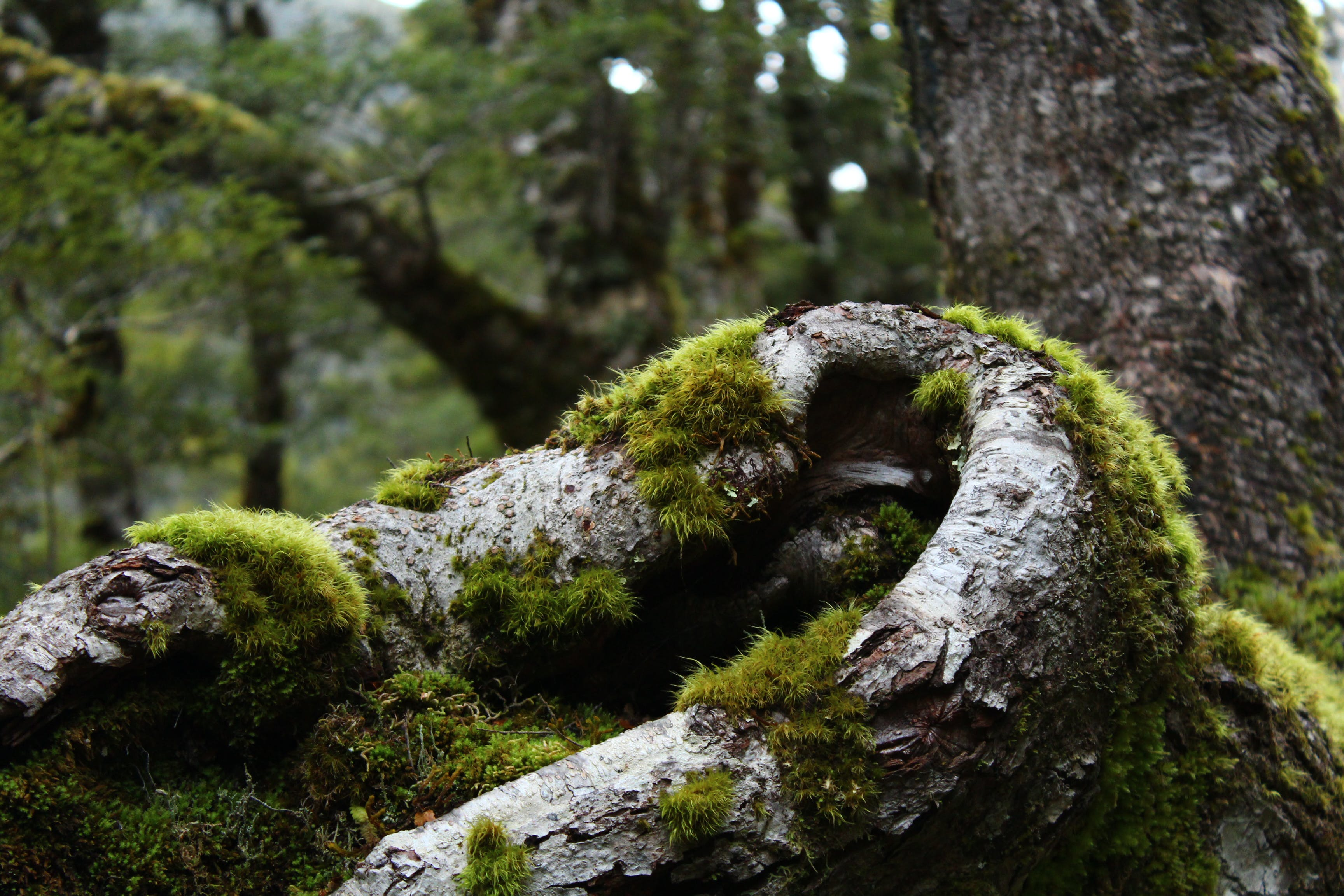 Tree Roots Covered With Moss