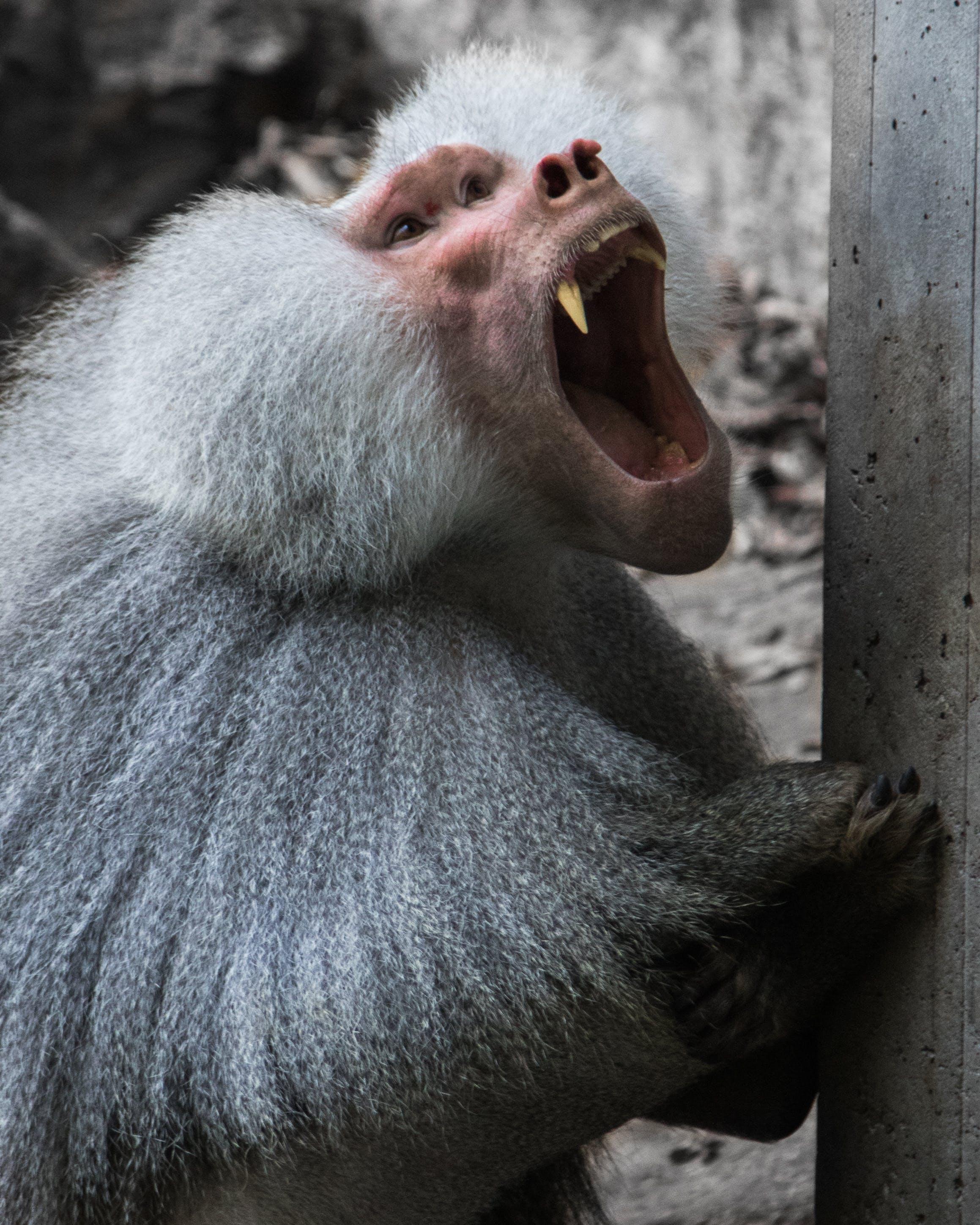 그레이, 동물, 동물 사진, 동물 포트레이트의 무료 스톡 사진