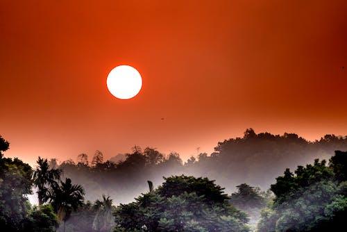 エキゾチック, オーガニック, オレンジの無料の写真素材