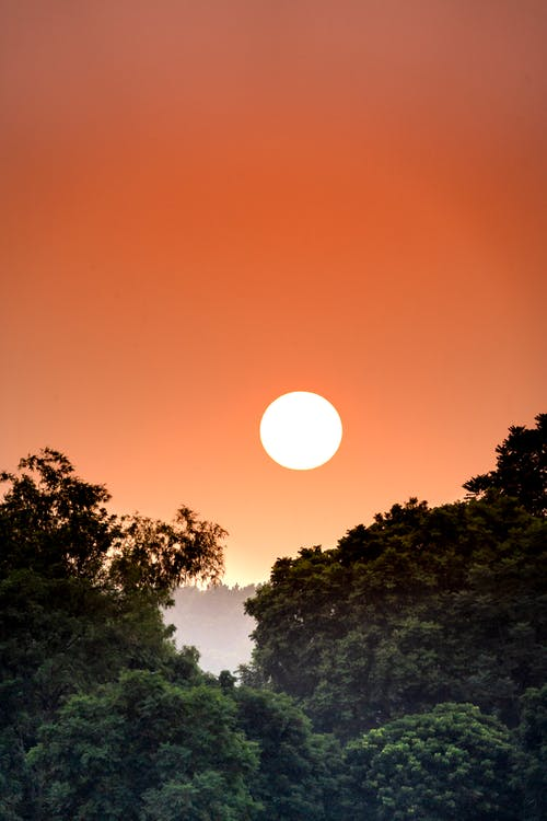 Picturesque scenery of bright sun shining on orange cloudless sky over dense green tropical woodland at sundown time in nature