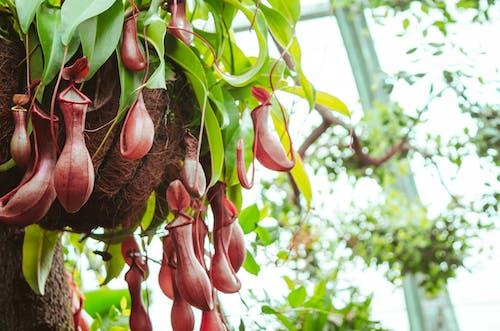 Ilmainen kuvapankkikuva tunnisteilla kauniit kukat, luonto, luontoäiti, luontokuvaus