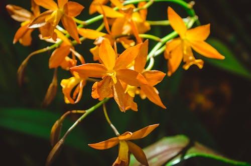 Foto d'estoc gratuïta de flor, flors boniques, mare natura, natura
