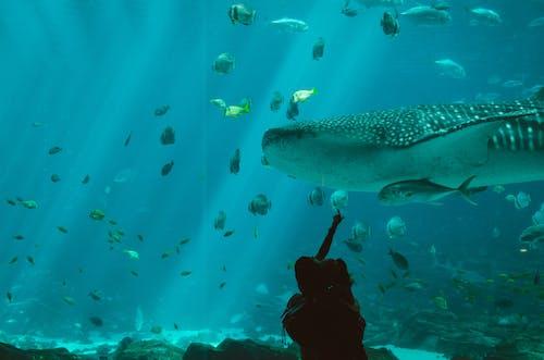 Ilmainen kuvapankkikuva tunnisteilla akvaario, kala, meren elämää, valas