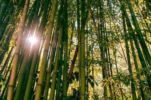 Бесплатное стоковое фото с золотое солнце, лес