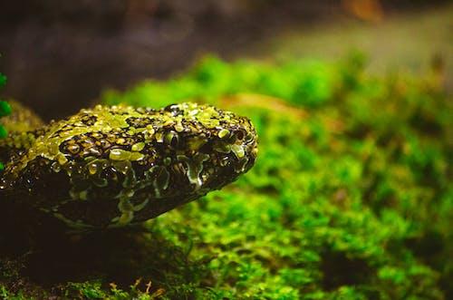Бесплатное стоковое фото с Биология, вода, дерево, дикая природа