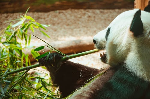 Foto profissional grátis de jardim zoológico, zoo, zoológico