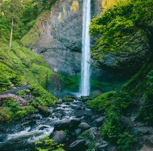 คลังภาพถ่ายฟรี ของ กระแสน้ำ, การเคลื่อนไหว, ต้นไม้, ธรรมชาติ