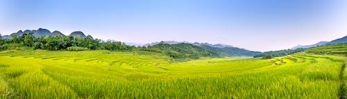 全景, 土地, 增長 的 免費圖庫相片
