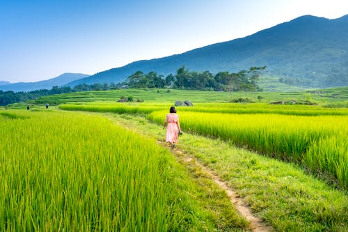 Unrecognizable woman walking on rural path amidst fields