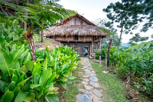 Exterior of aged wooden cottage with thatched roof located among bushes and exotic plants with green leaves in tropical resort