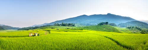 Wide angle of distant group of workers strolling on grassy track on rice plantation while working in countryside on farmland