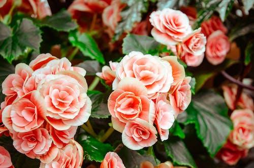 Gratis arkivbilde med blomster, blomsterblad, blomstre, botanisk