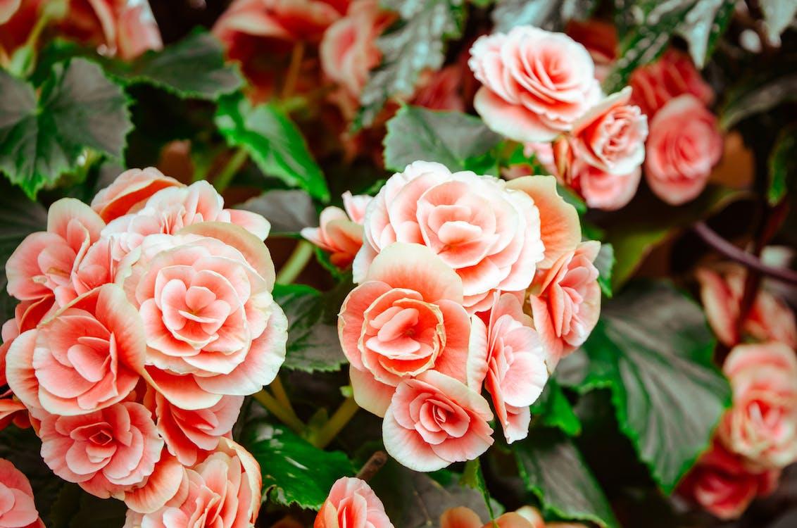กลีบดอก, กลีบดอกไม้, การแต่งงาน