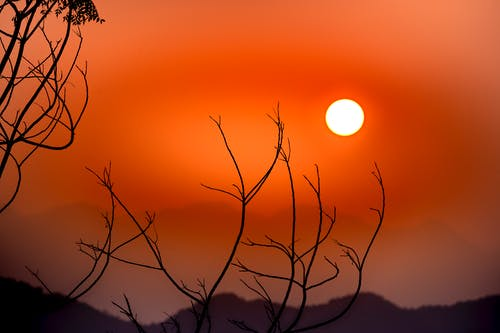 Silhouettes of leafless branches growing on thin stems against bright red sunset sky in evening