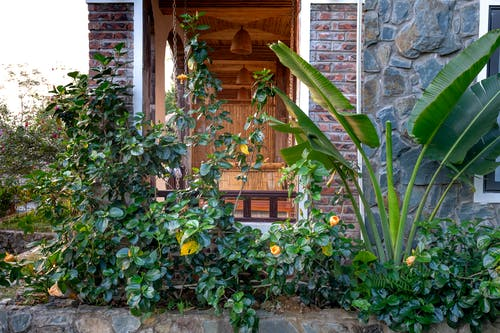 Exterior of cottage decorated with stones and green tropical plants outside in daytime