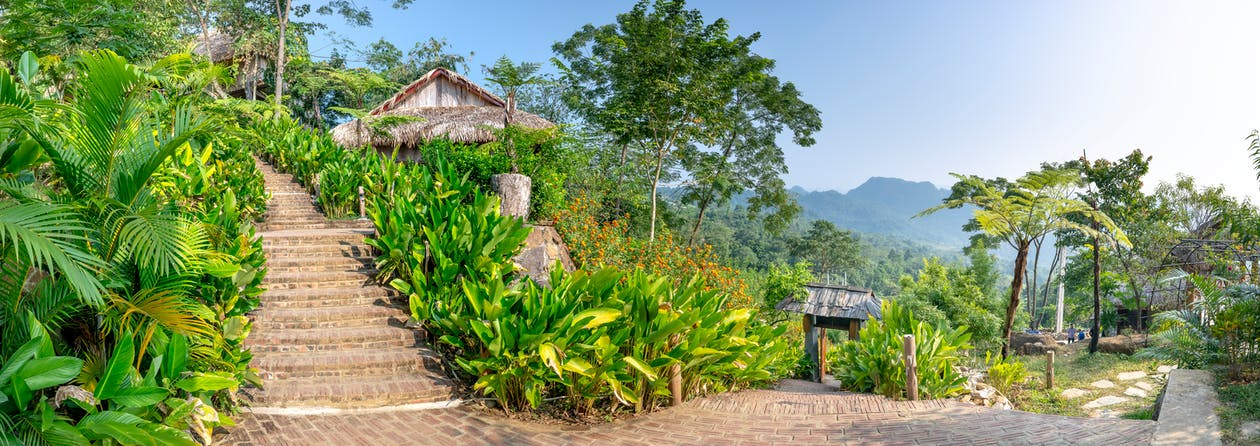 Picturesque panorama of green patio with palms and exotic plants and with long outdoor stone stairs in tropical resort