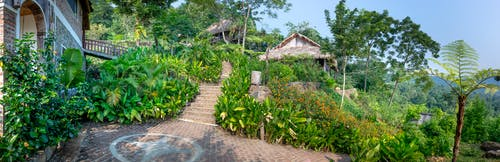 Green tropical garden beside cottage