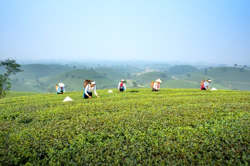 People strolling on tea plantation in countryside
