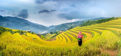 Fotos de stock gratuitas de abundancia, afuera, agricultor
