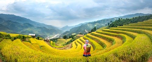 Fotos de stock gratuitas de afuera, agricultor, agricultura