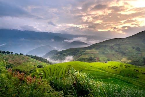 Immagine gratuita di agricoltura, altopiano, ammirare