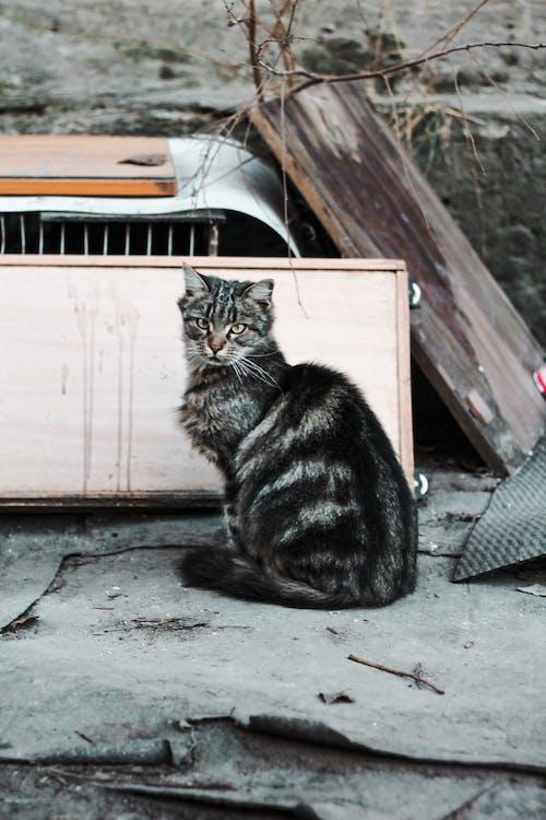 Imagine de stoc gratuită din abandonat, adorabil, animal, animal de casă