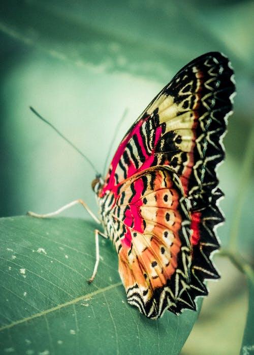 Безкоштовне стокове фото на тему «loifotos, антена, Безхребетні, біологія»