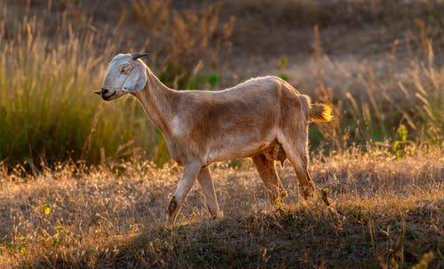動物, 動物學, 可愛 的 免費圖庫相片