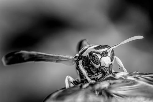 Small wasp drinking water in woods