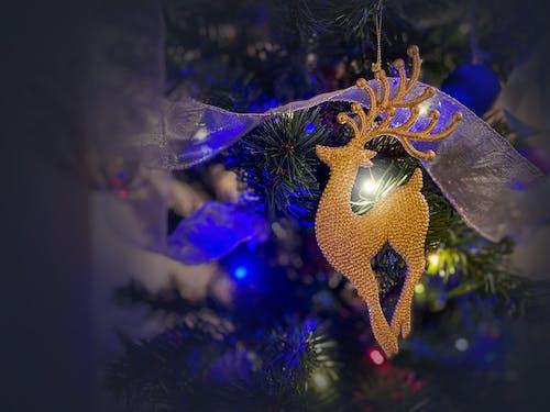 Free stock photo of beautiful, christmas, christmas atmosphere