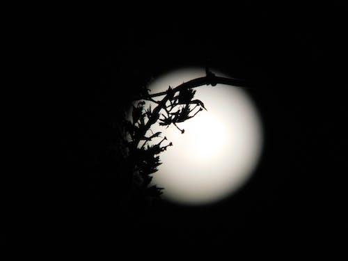 Silhouette of tree branch against luminous bright moon on dark sky at starless night