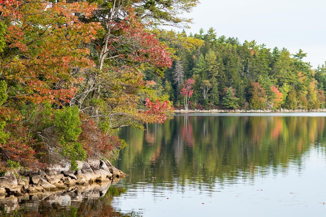 Foto stok gratis air, cairan, warna musim gugur