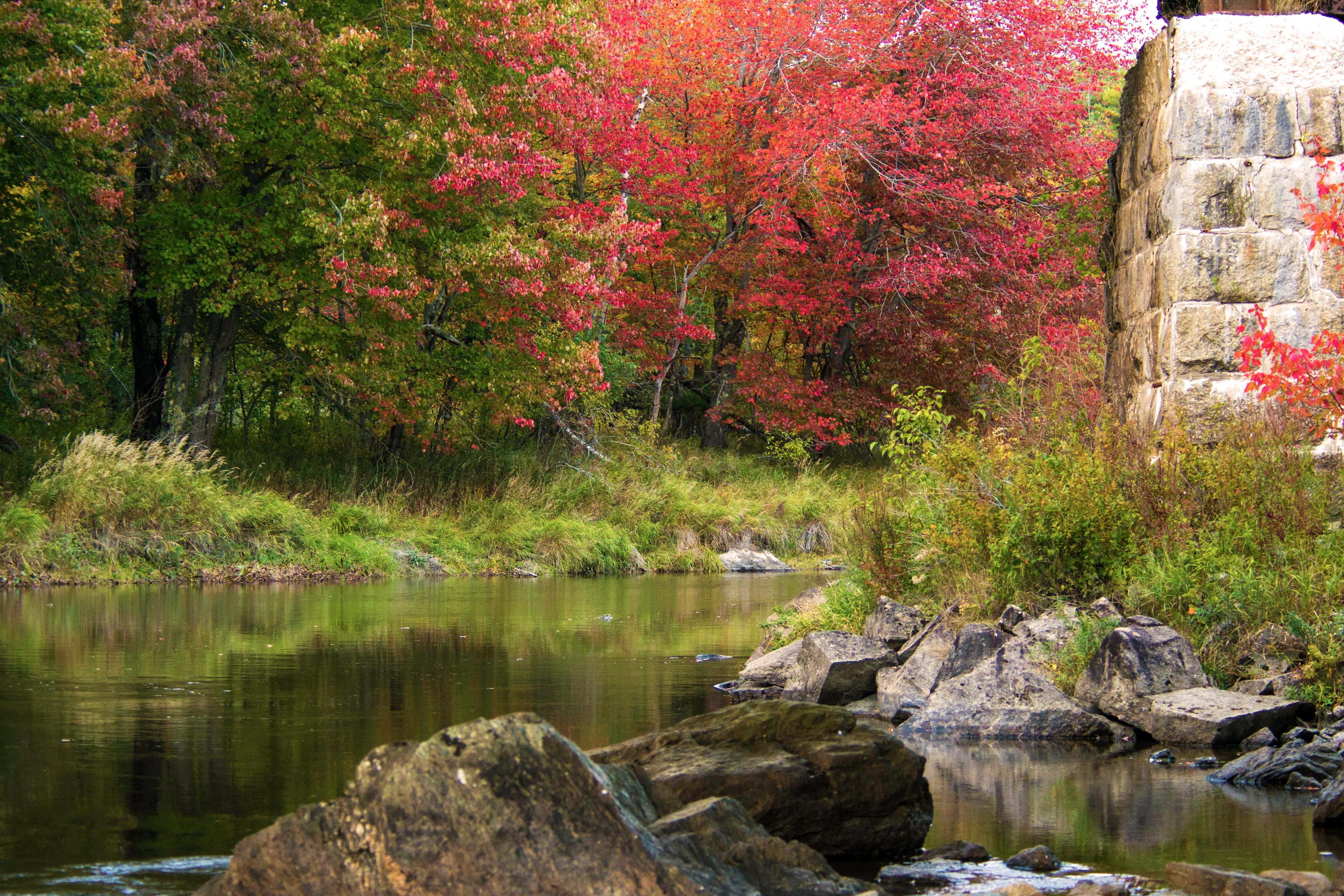 Free stock photo of autumn colours, fall foliage, river