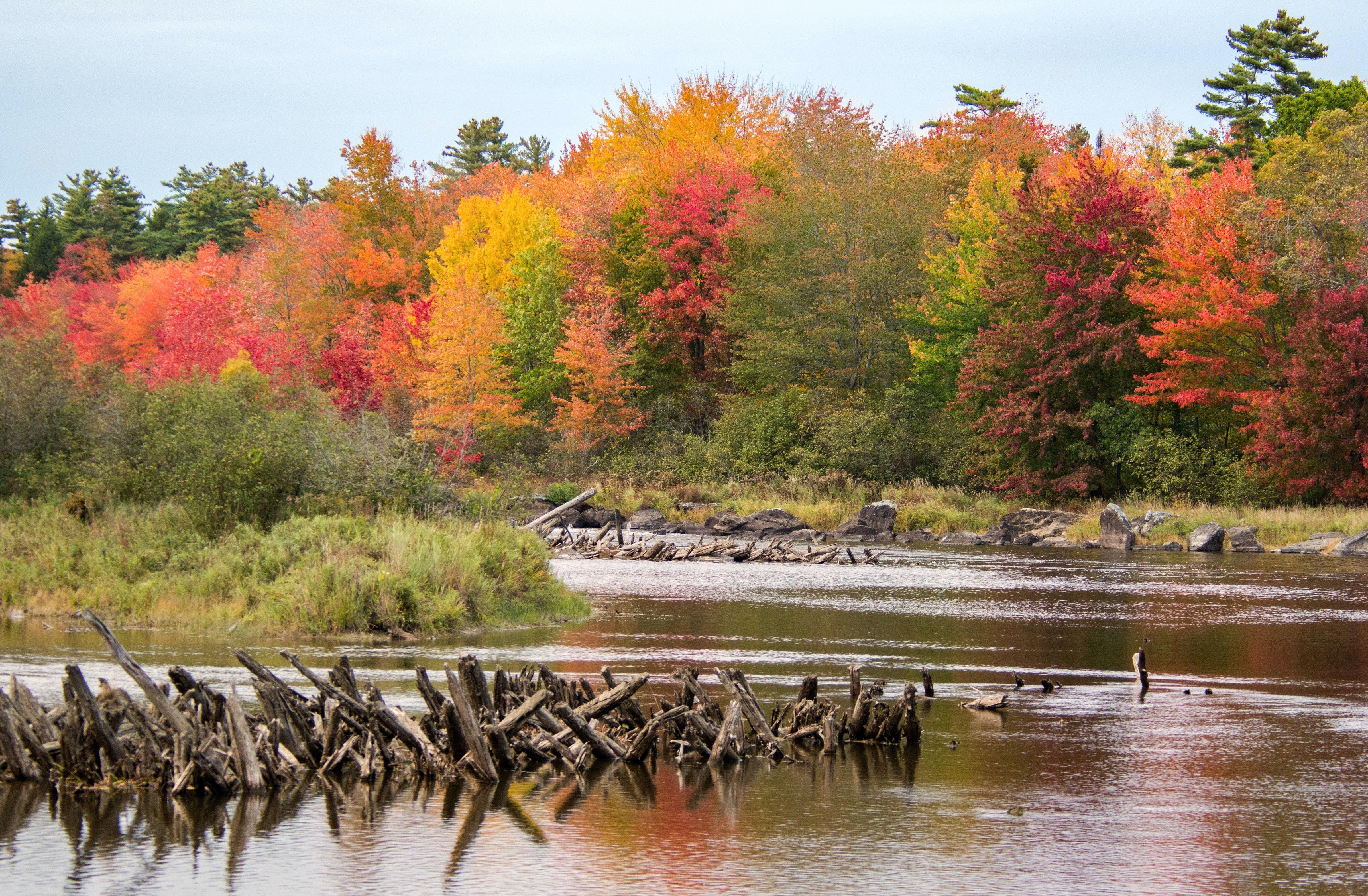 Free stock photo of autumn colours, autumn leaves, fall foliage, fall leaves