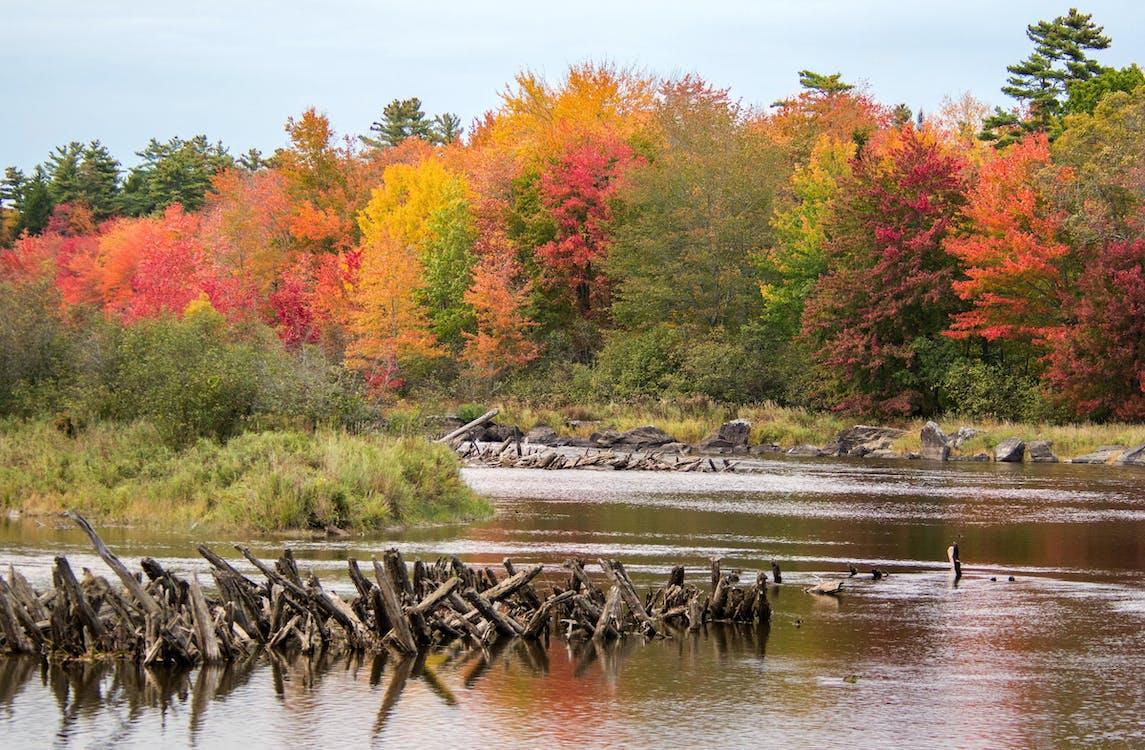 Foto stok gratis daun gugur, daun jatuh, daun musim gugur