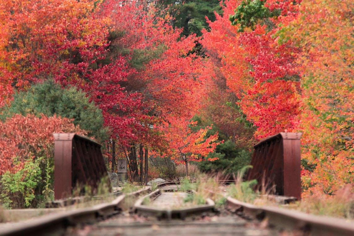 Gratis lagerfoto af efterårsfarver, efterårsløv, jernbanespor