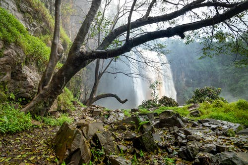 Powerful cascade falling from rocky cliff covered with green plants in mountainous area with tree trunks and steep cliffs in nature