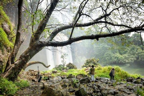 Photos gratuites de admirer, anonyme, arbre