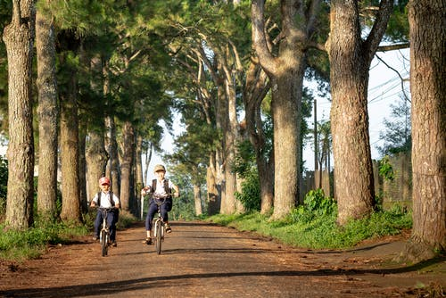 Children riding bicycles along trees