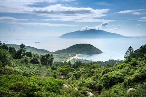 Forested mountain near calm sea