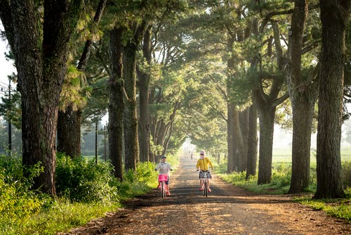 Distant kids riding bikes on rural path amidst tall green trees on grassy ground in countryside on sunny summer day