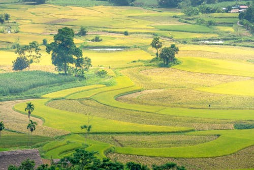 Scenic view of green plantations with tropical trees growing on farmland in summertime in daylight