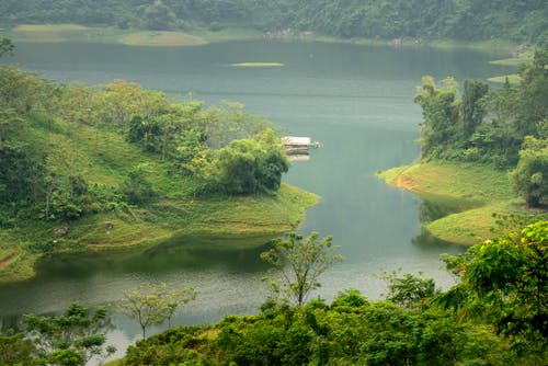 River among lush green plants in summertime