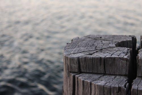 Brown Log on Sea