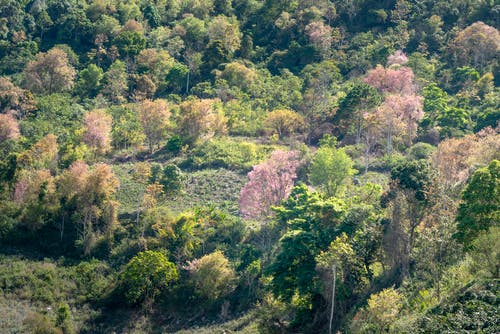 Blooming Sakura and green trees growing in forest