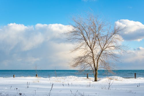 Leafless Tree on Snow Covered Ground Near Body of Water