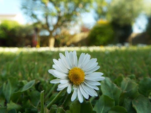 Immagine gratuita di bocciolo, campo, crescita, erba
