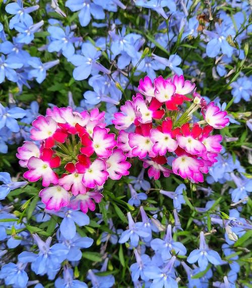 美しい花, 花の写真の無料の写真素材