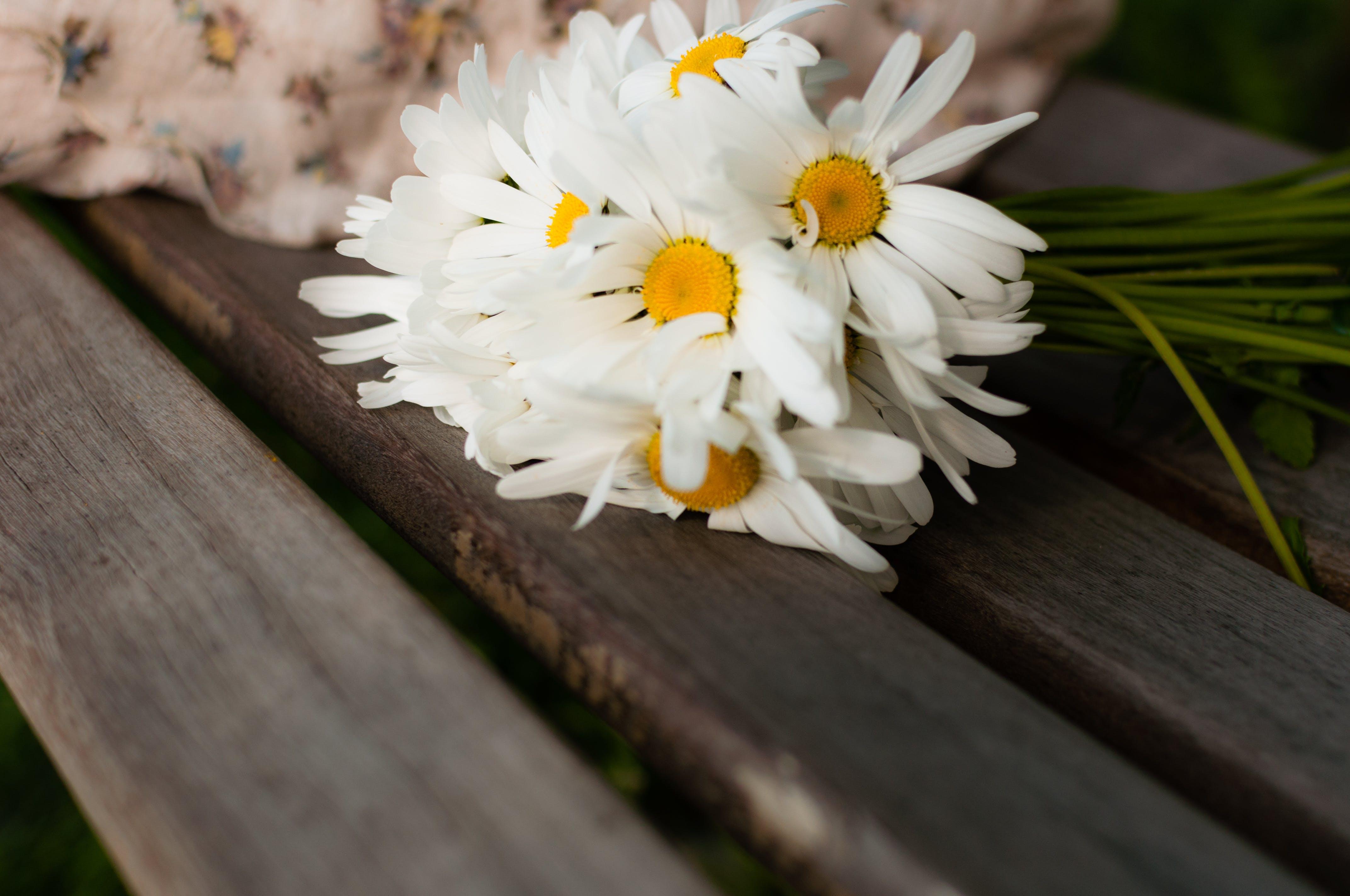 Gratis lagerfoto af blomster, buket, flora, hvid