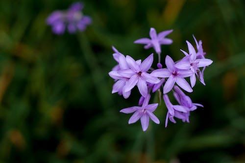 Gratis lagerfoto af blomst, blomster, close-up, é £ žä¿¡å